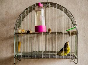 Pássaro preso na gaiola. (Foto: Lucas De Godoy/Jornal A Sirene)